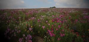 Preservación y valorización de los terruños, la biodiversidad y los paisajes
