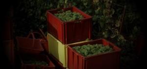 Cajas de 50 kg